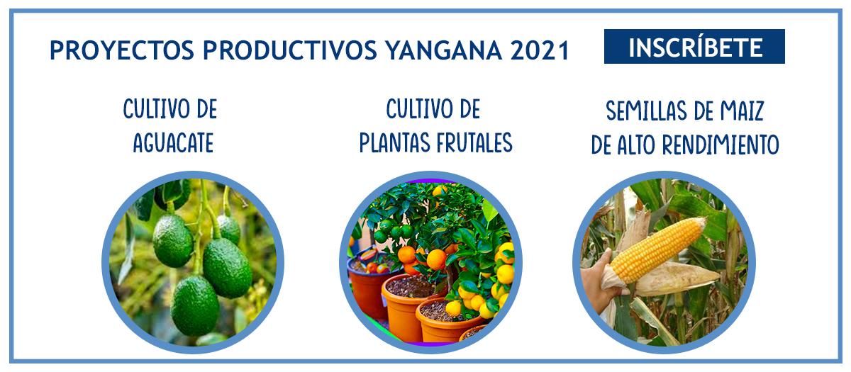 socializacion proyectos productivos 2021